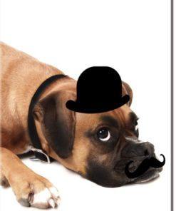 Plakat piesek w kapeluszu do pokoju dziecka