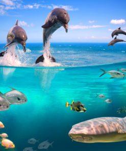 Fototapeta z delfinami
