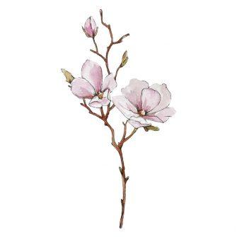 naklejka kwiaty magnolii na ścianie
