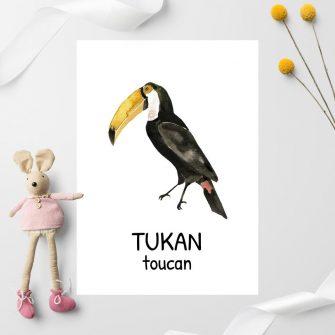 Plakat edukacyjny - Tukan dla dziecka