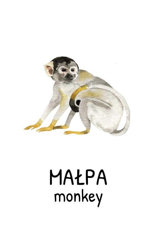 Plakat z małpą