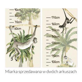 Zielona dżungla - Miarka wzrostu