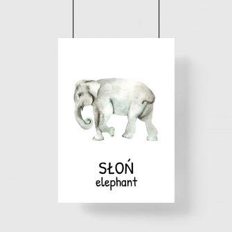 Plakat edukacyjny ze słoniem dla dziecka