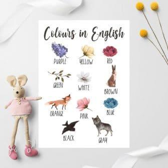 Edukacyjny plakat dziewczęcy z kolorami - Fioletowy bez